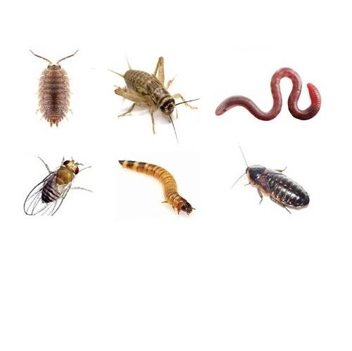 Microfauna and Feeders